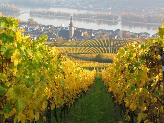 outono-em-Rudesheim1  4