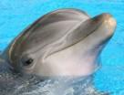 Saiba qual cruzeiro permite mergulhos com golfinhos