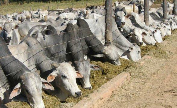 Aplicativo para os produtores rurais