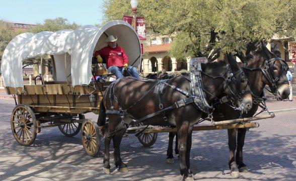 Carruagens do Velho Oeste atraem turistas ao Texas