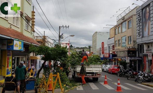 Poda de árvores começa no Centro e comunidade questiona serviço